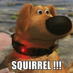 "The dog from the movie ""Up"" being distracted by a squirrel."